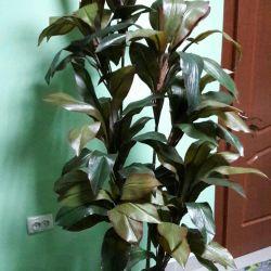 Исскуственные растения