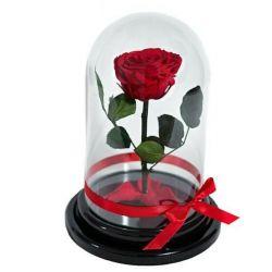 Троянди в колбі
