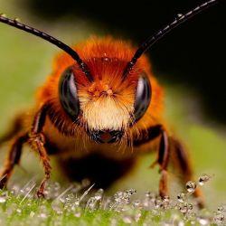 Beekeeping Karnika