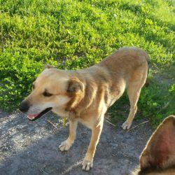 Dog Bimka really wants to become a master