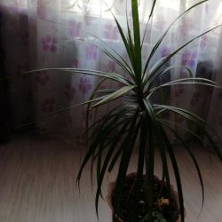 I will sell Yucca