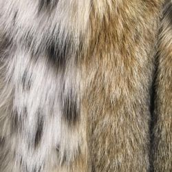 Θα πουλήσω ένα γούνινο παλτό από λύγκα