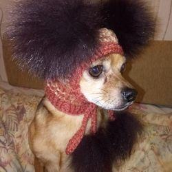 Шапочка для маленької породи собак