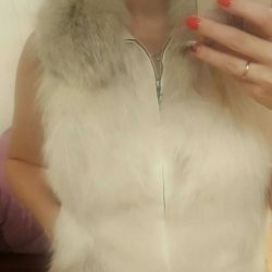 Arctic vulpe vesta