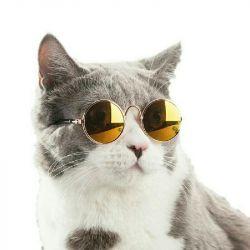 Ochelari pentru animale