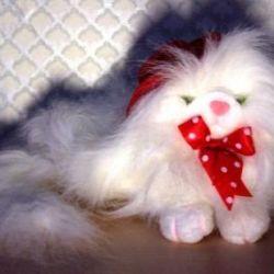 Persian cat in a red felt hat