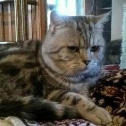 Cat for knitting