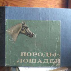 Carne de cai