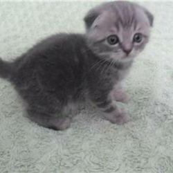 Yavru kedi iyidir. satış