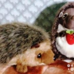 Hedgehogs with balls and a squeaker
