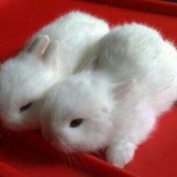 Малышня карликовых декоративных кроликов