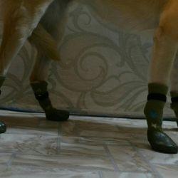 Носочки для средней собаки!