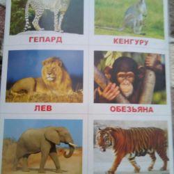Loto hayvanları 60 kart