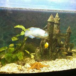350 liters aquarium with panoramic glass