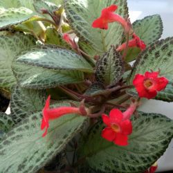 Εσωτερικά και λουλούδια κήπου