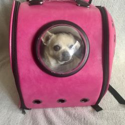 Bright pink backpack for animals. New.
