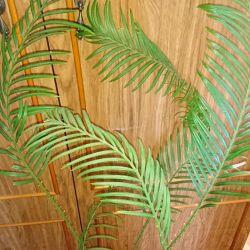 Syngonium, cicada palm (Cycas)
