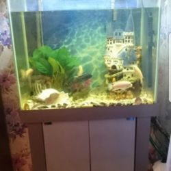 Kabin ve dış filtreli akvaryum 200 litre