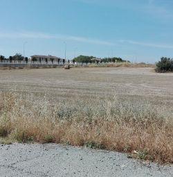 Câmpul din Aradippou, Larnaca