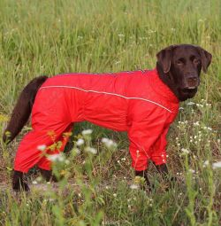 The warmed overalls on Labrador, tailoring