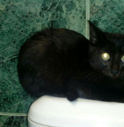 Kitty 3 months