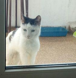 Знайдена молода кішка у Владивостоці