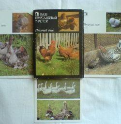 Bir dizi kart Bahçeniz