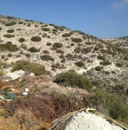 Câmpul din Agios Tychonas