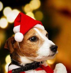 Pălărie de crăciun pentru animale