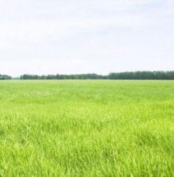 Plot de 15 hectare (coli)