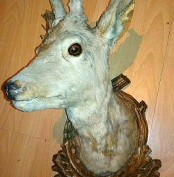 Scarecrow head of roe deer