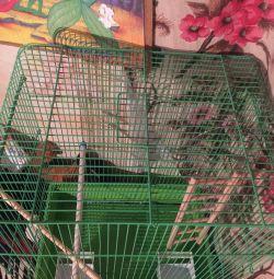 Cage pentru păsări. Cele mai multe.