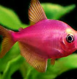 The most beautiful fish here