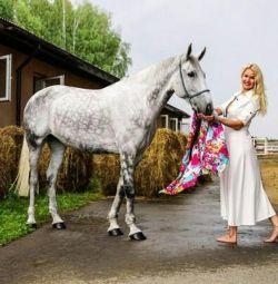 Atlarla fotoğraf çekimi