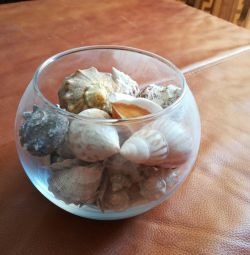 Seashells de la Marea Neagră în acvariul interior