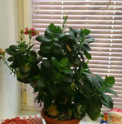 Σπίτι φυτών.