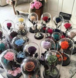 Живі троянди в колбі