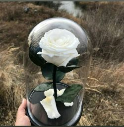 Τριαντάφυλλο σε λευκή φιάλη