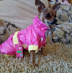 Αδιάβροχο για ένα σκυλί