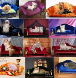 Sofas for cats and dogs to order.