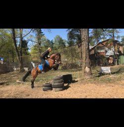 Άλογο για ενοικίαση. Πόνι προς ενοικίαση