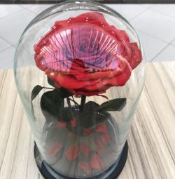 Rose in a flask and unique gifts