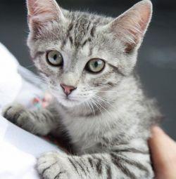 Котeнок терміново потребують доме😿❤