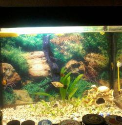 акваріум 80л