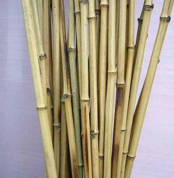 Bamboo rods, non-extendable, 6 meters long