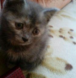 Kitty 2 months