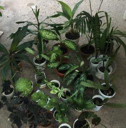Комнатные растения.цветы