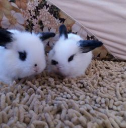Pui și iepuri decorativi