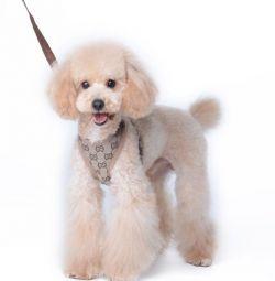 Шлейка Gucci для собак