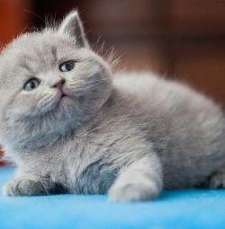 Barney bear cub kitten